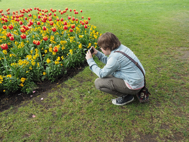 photographing tulips