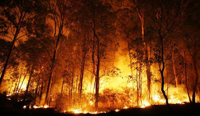Αν η θερμοκρασία ανέβει κατά 3 βαθμούς θα αυξηθούν 100% οι πυρκαγιές στα δάση της Μεσογείου