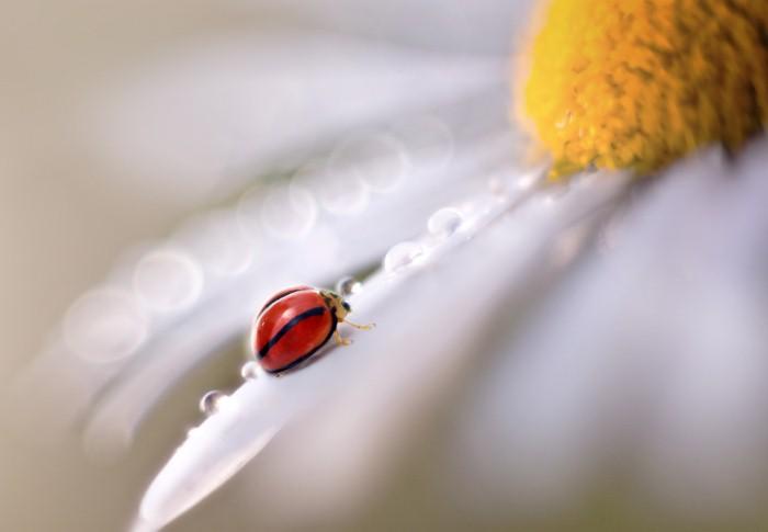 Необычные фотографии насекомых 6