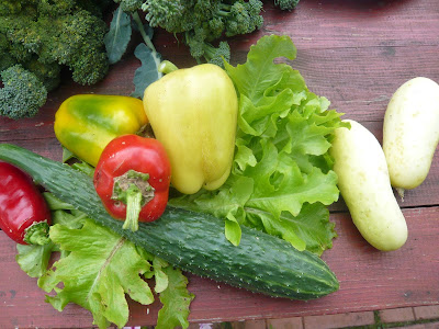 посев овощей