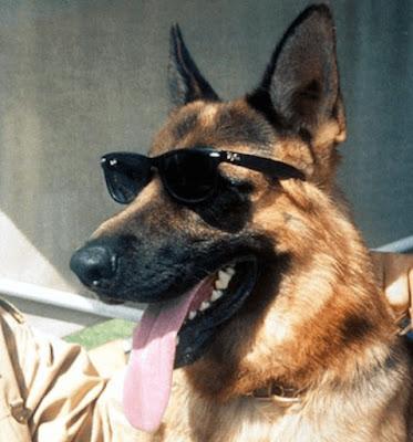 Gunther IV, il cane più ricco del mondo