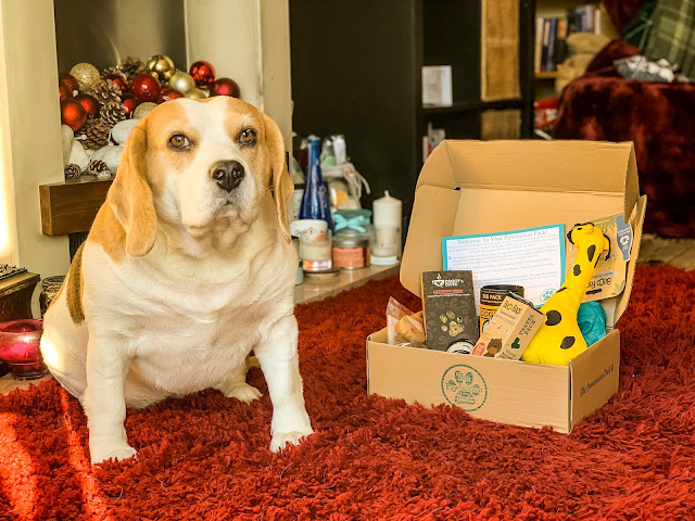 Holly Bobbins the Beagle sits next to a pawfection pack for dogs, mandy charlton, photographer, writer blogger