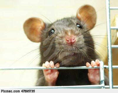 Broken Heart Love Quotes Wallpaper Funny Rat Pictures Online News Icon