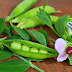 7 Health Benefits Of Green Peas - मटर खाने के 7 फायदे