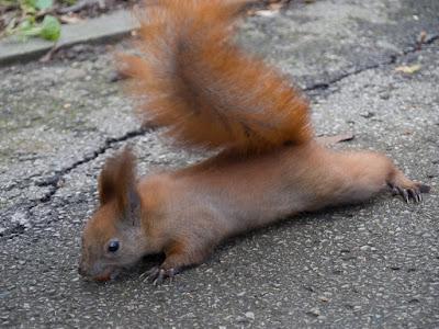 wiewiórki w parku zdrojowym