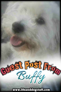 Guest post from Buffy