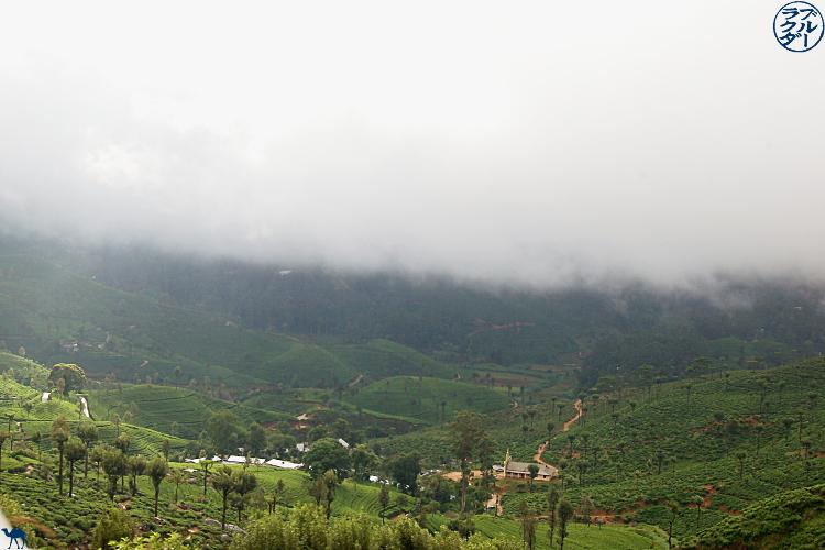 Le Chameau Bleu - Initiation aux thés Darjeeling avec Mariage Frères à Paris