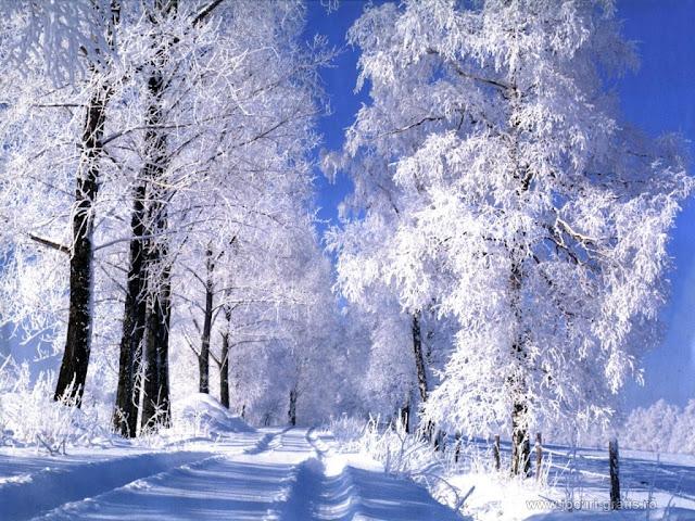 MIREASAPENTRUFIULMEU - Pagina 32 Poze-iarna-de-vis_1024x768