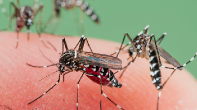 How To Get Rid Of Mosquitoes In Your House Proven Method