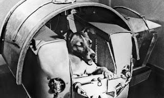 Primer ser viviente en el espacio. La perra Laika viajo al espacio en el año 1957