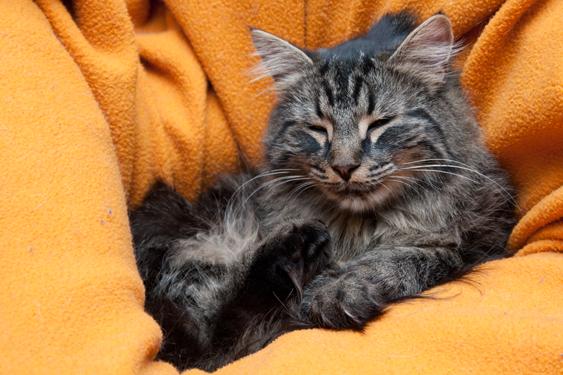 Kissan tunne-elämä, ilo