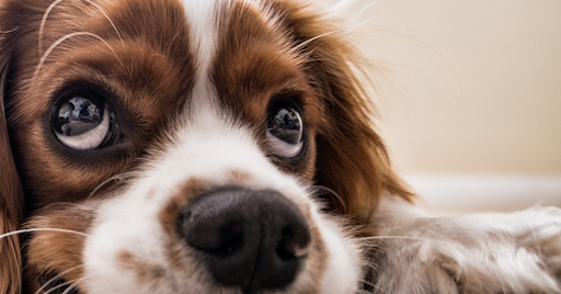 4 Healthy Reasons Why You Should Own a Pet