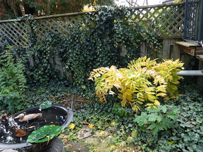 Leslieville Fall Cleanup Before by Paul Jung Gardening Services--a Toronto Gardening Company