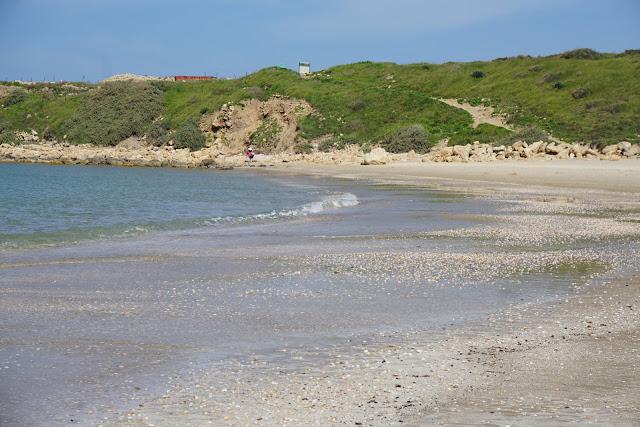 מפרץ פראי בחוף דור