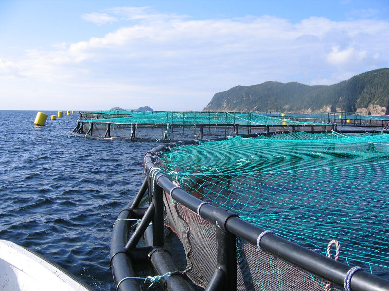 Nearly 45 Aquaculture Jobs Headed To Shelburne | Country 100 7