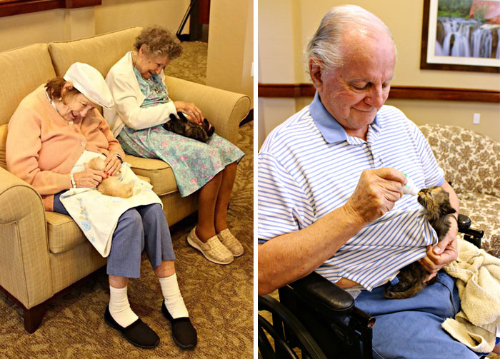 Elderly Dog Homes Louisville Kentucky