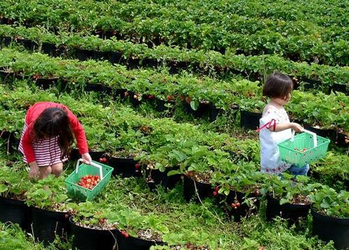 Agrowisata Taman Mekarsari Bogor