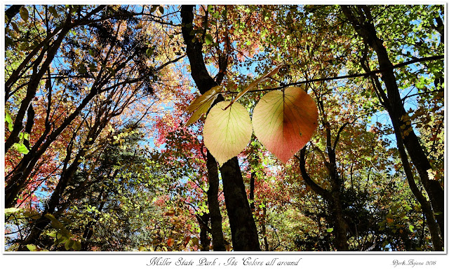 Miller State Park: Its Colors all around