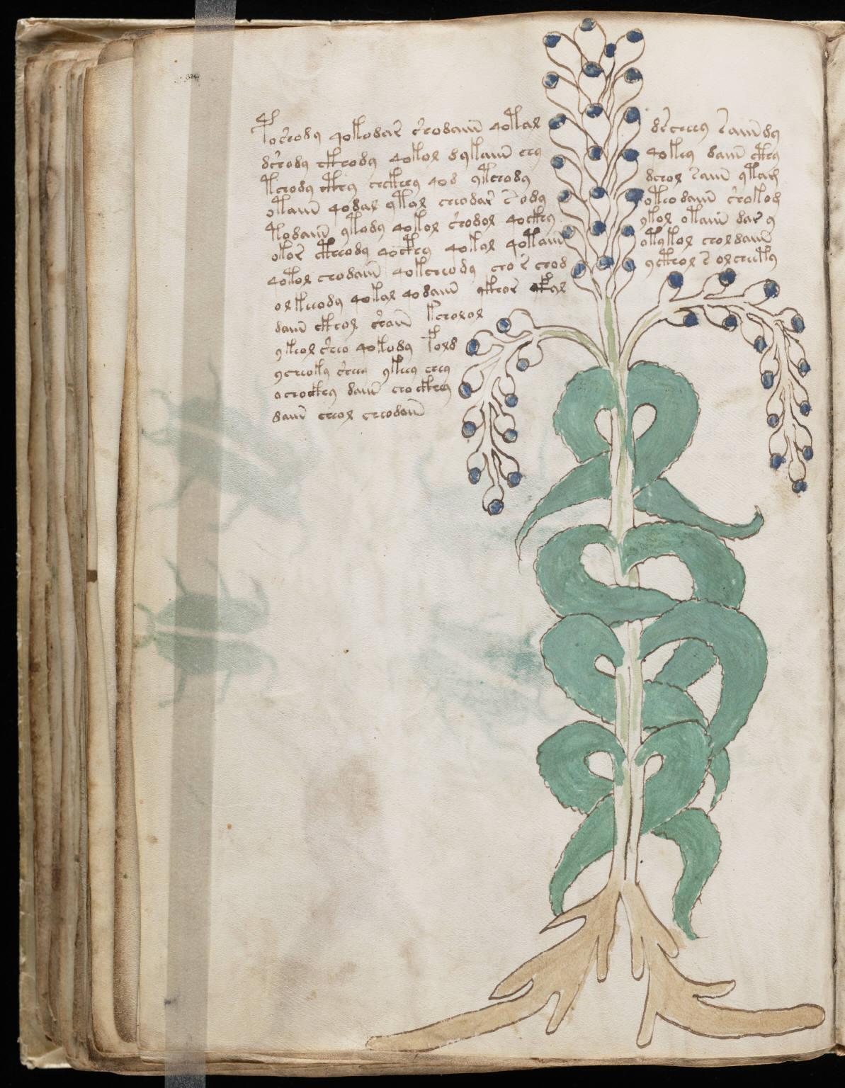 manuscrito100