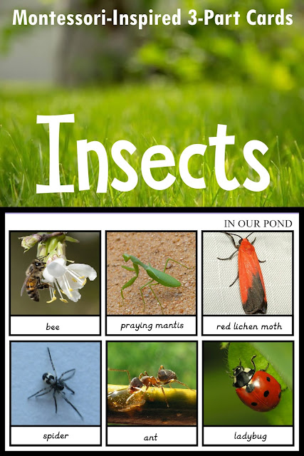 Montessori Inspired 3-Part Cards to Match the Safari Ltd Insect toob // free printable // In Our Pond