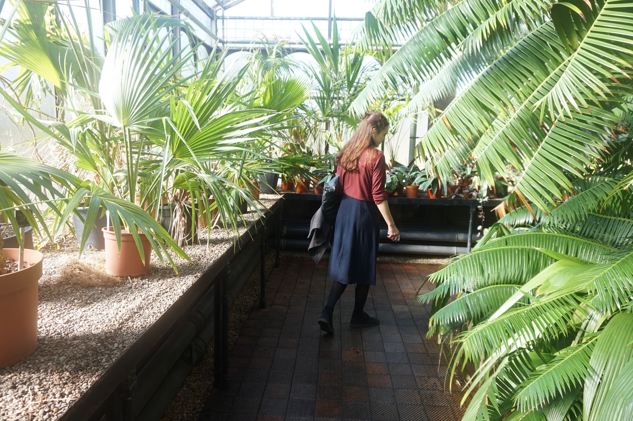 woman walking along walkway in a botanical greenhouse