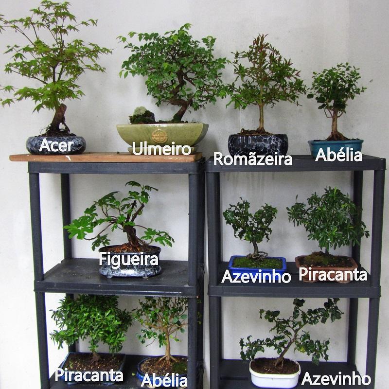 Buc lico an nimo segunda estante para bonsai - Estantes para plantas ...