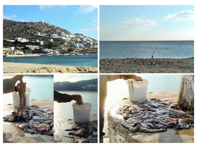 Nad greckim morzem na plaży rybak czyści ośmornice  wkłada octapusy do wiadra