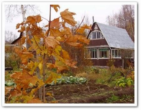 Сад и огород - осень онлайн