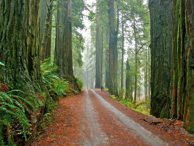 Parco Sequoie Redwood