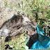 Φιλοζωικός Όμιλος Βέροιας: Τηρεί το Νόμο ο Δήμος Βέροιας για τα αδέσποτα ζώα;