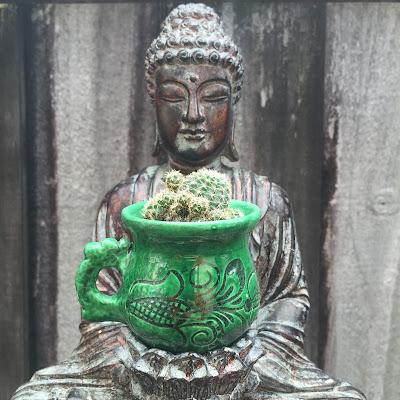Buddha cactus planter, cactus, cacti, garden design Miami, Gymnocalycium bruchii
