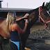 Τα άλογα συνδέουν τη συναισθηματική αξία των ανθρώπινων εκφράσεων του προσώπου με τη συναισθηματική αξία των ανθρώπινων φωνών