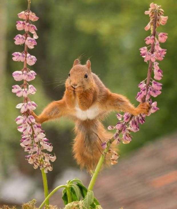 Funny animals of the week - 5 August 2016, best animal photos, funny animal pics, animal images