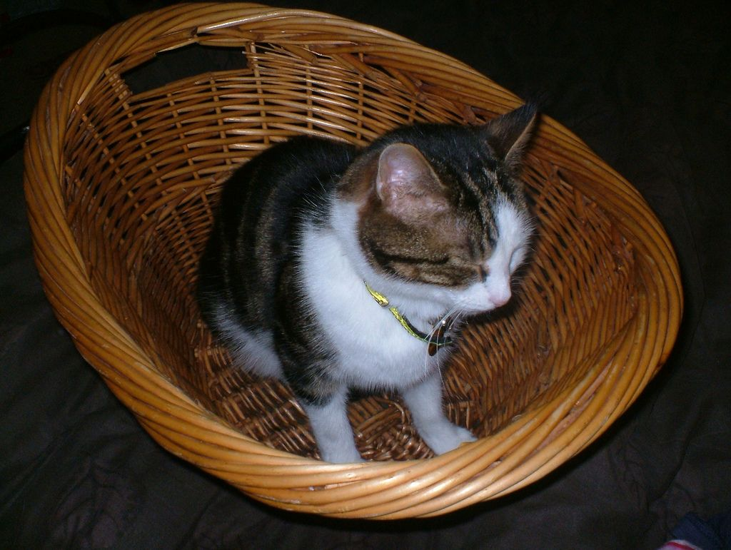 24. cat in a basket  by musicmonkey76