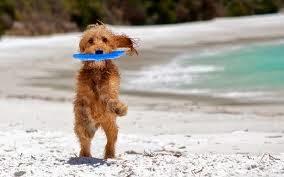 cães brincando na praia