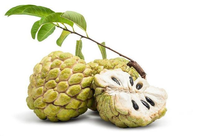 manfaat dan khasiat buah srikaya untuk kesehatan