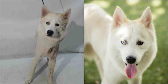 refugio-de-animales-en-Florida-récord-adopciones-mejores-fotos-animales