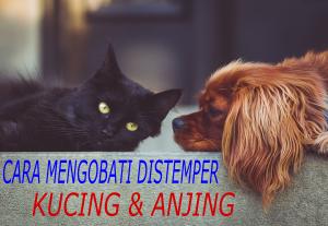 cara mencegah virus distemper pada kucing atau anjing