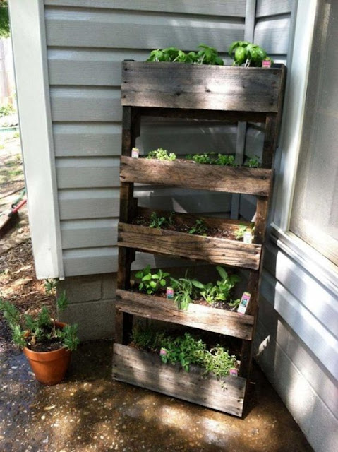 Beautiful pallet gardening ideas boo gardening for Wood pallet herb garden
