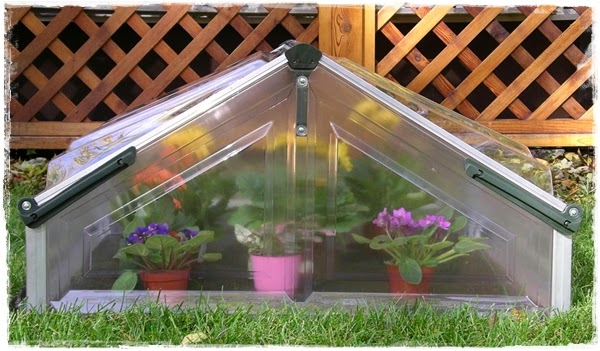 "<img src=""mini greenhouse2.jpg"" alt=""mini green house"">"