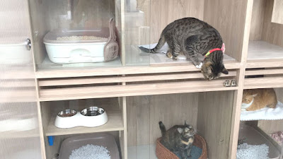 Cat boarding Services in Singapore