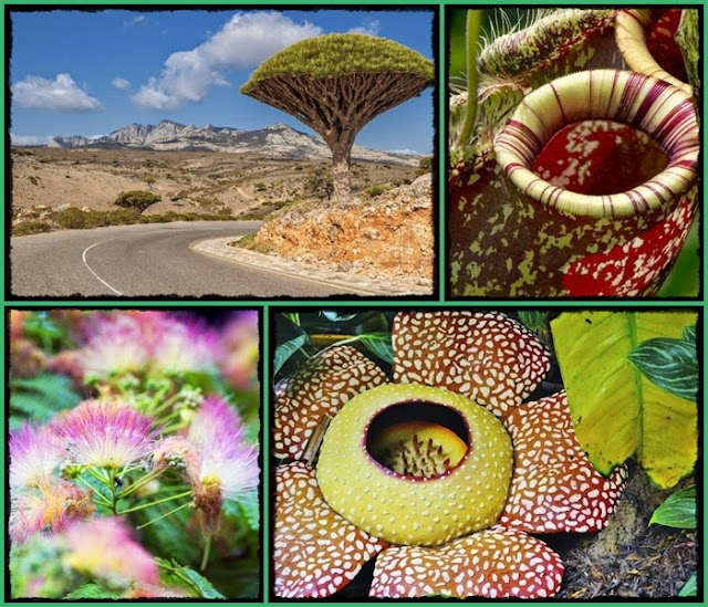 https://bio-orbis.blogspot.com/2014/10/as-10-plantas-mais-incriveis-do-mundo.html