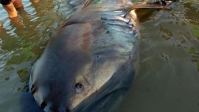 Ikan di Dasar Laut Terdampar, Warga Klaim Pertanda Gempa