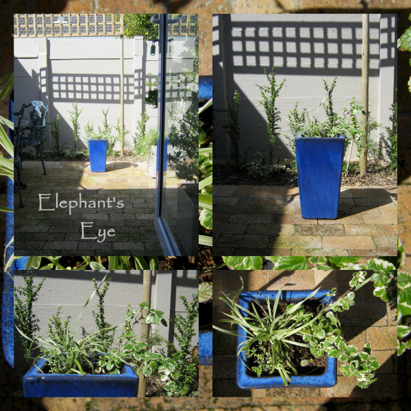 Tall blue pot on the East Patio