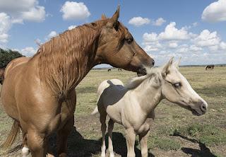 Arizona horse properties describes communities for horse owners in prescott.