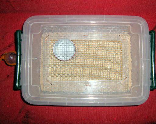 Cách tự làm chuồng cho chuột hamster cực đơn giản