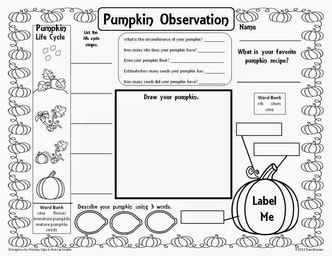 Stages Of A Pumpkin Worksheet
