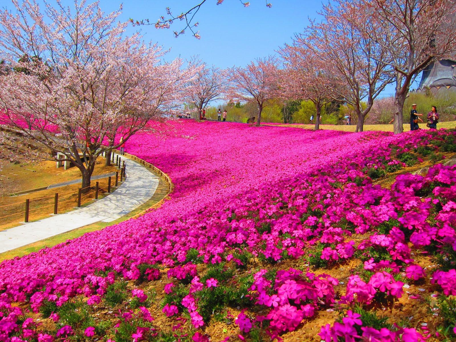 suasana nah biar gak kusut saya tampilkan pemandangan taman bunga
