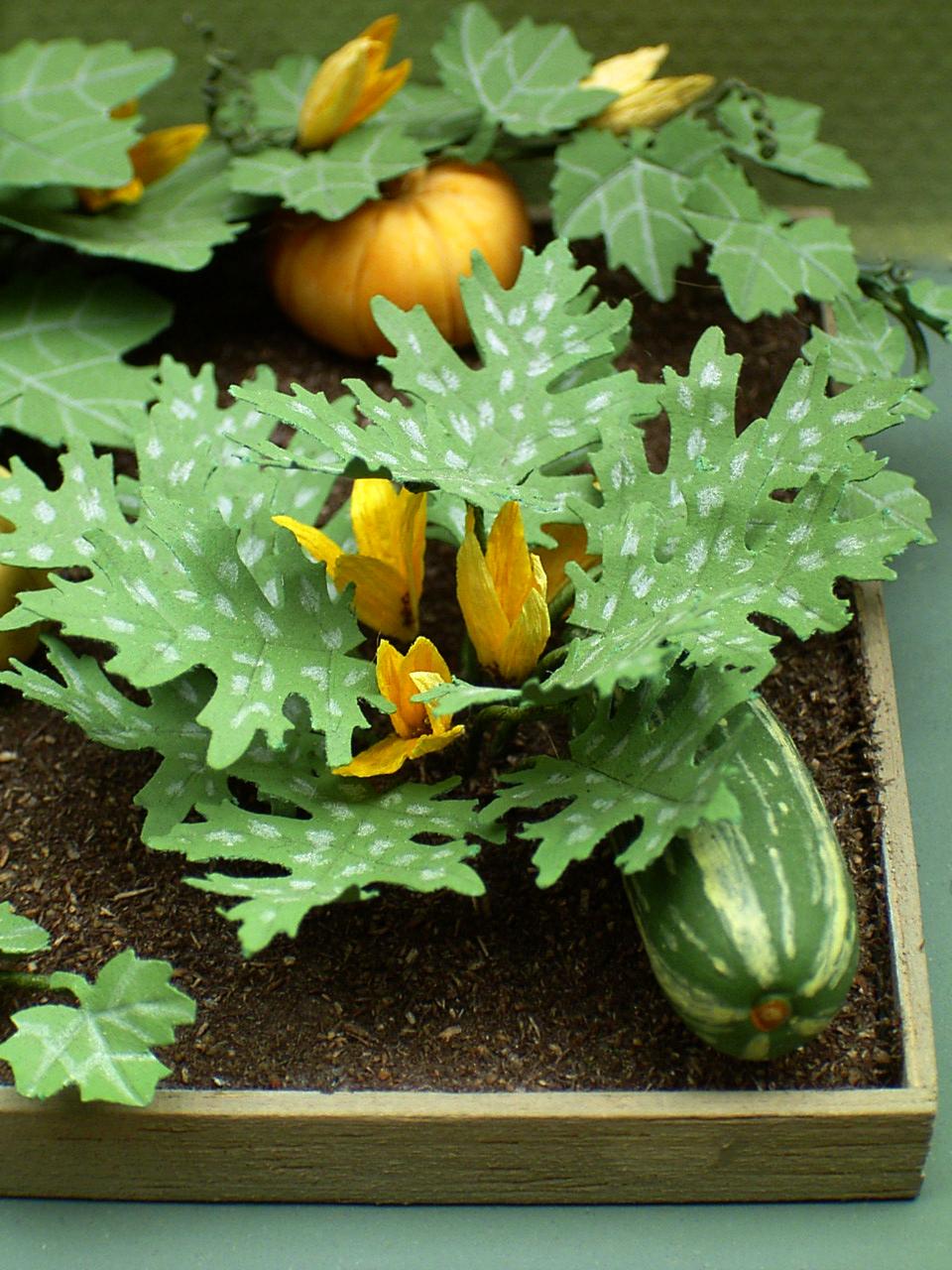 The miniature garden the vegetable garden - Miniature plants for fairy gardens ...