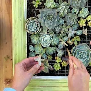 Cara Membuat Kerajinan Tangan Yang Mudah, Bertanam Dengan Media Pigura 8